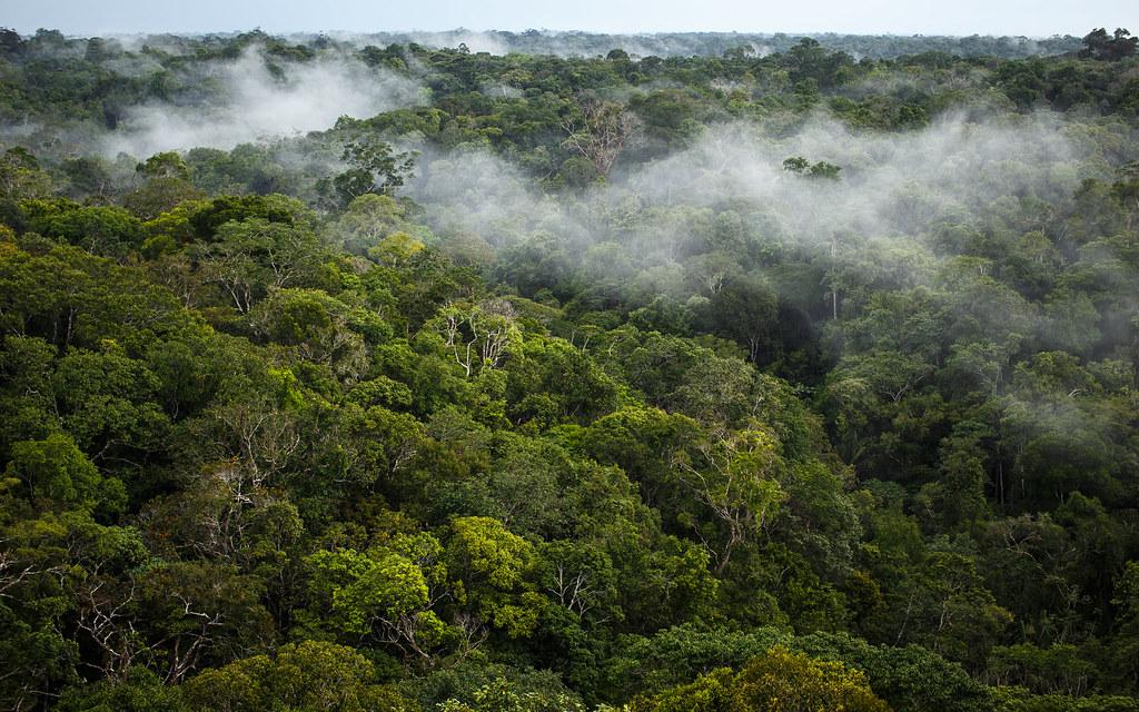 développement du webmapping : exemple d'un projet en forêt amazonienne